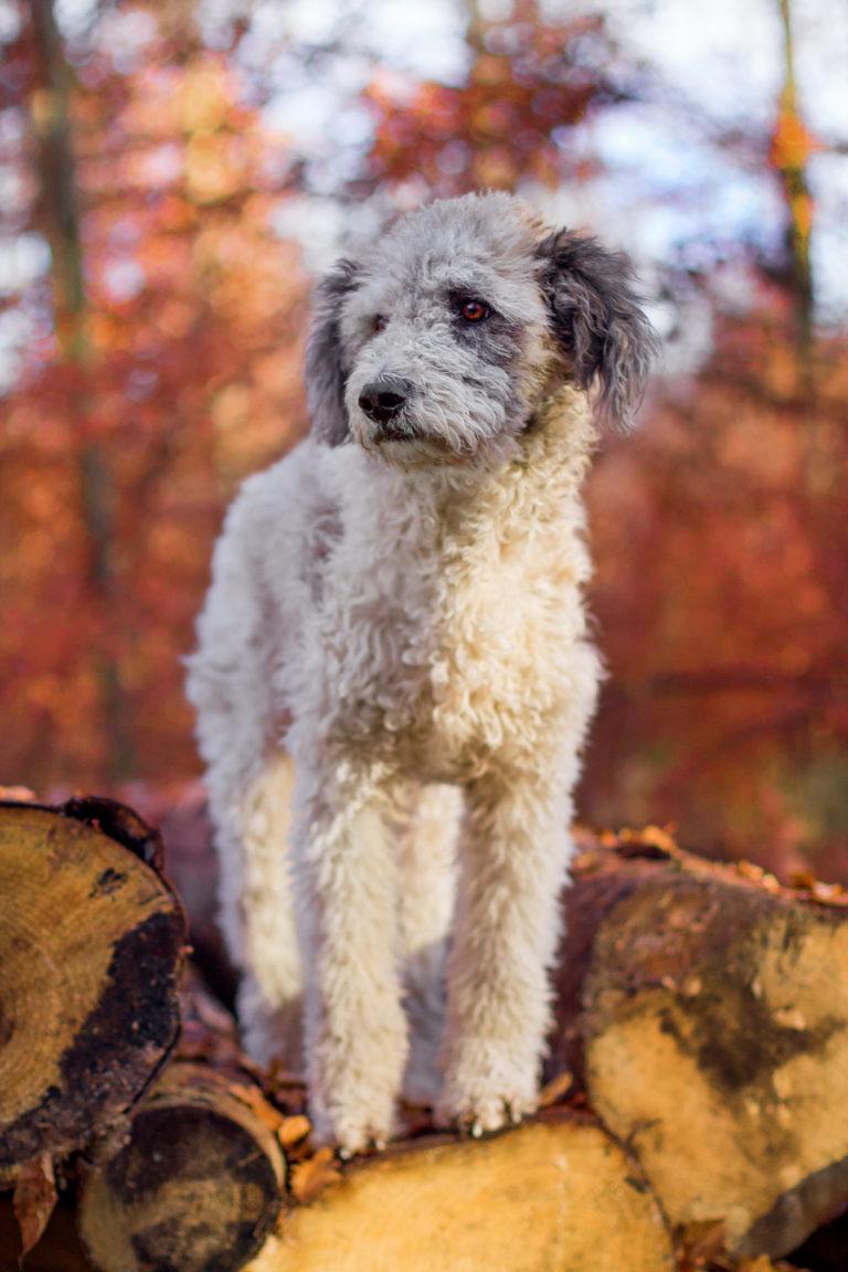 Tierfotografie Hund auf Baumstämmen