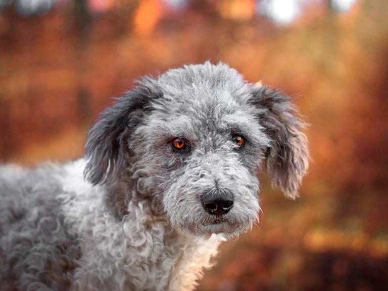 Tierfotografie Closeup Hund mit Wolfsgesicht