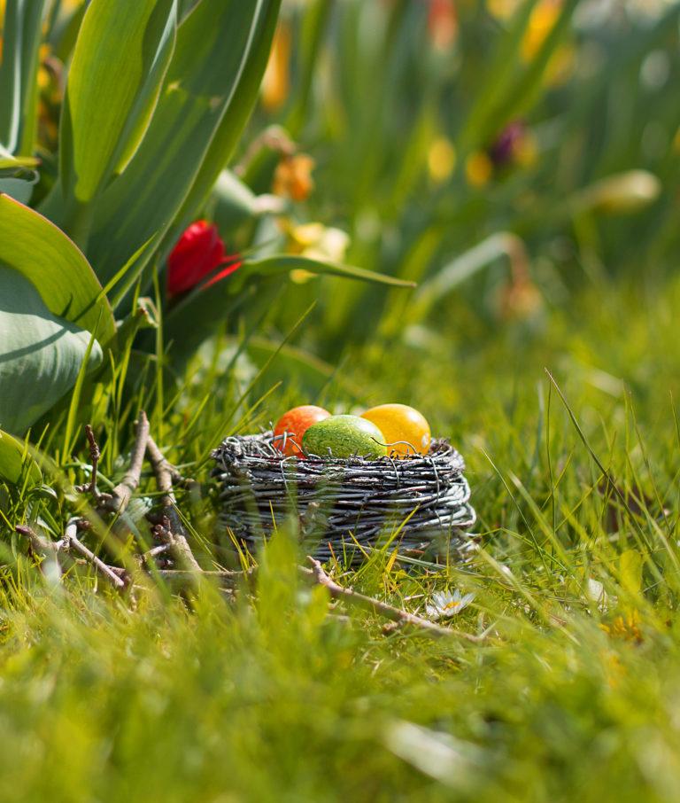 Ostershooting Blumenbeet Osterglocken Ostereier Nest