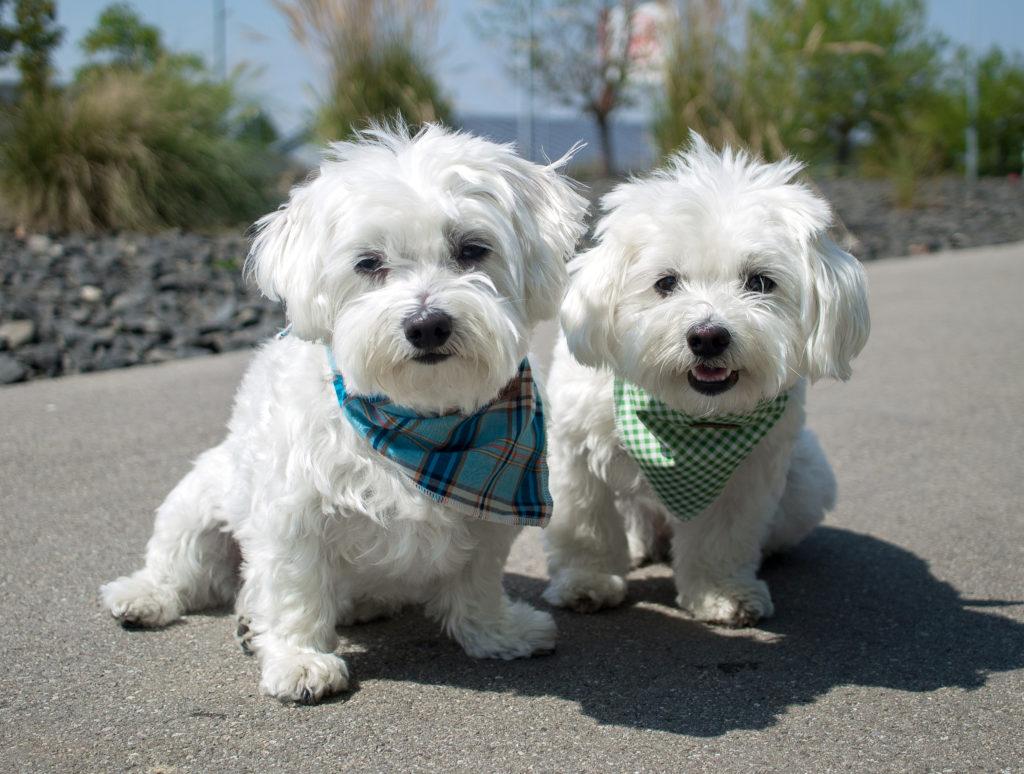 Tierfotografie Hunde mit Halstuch outdoor