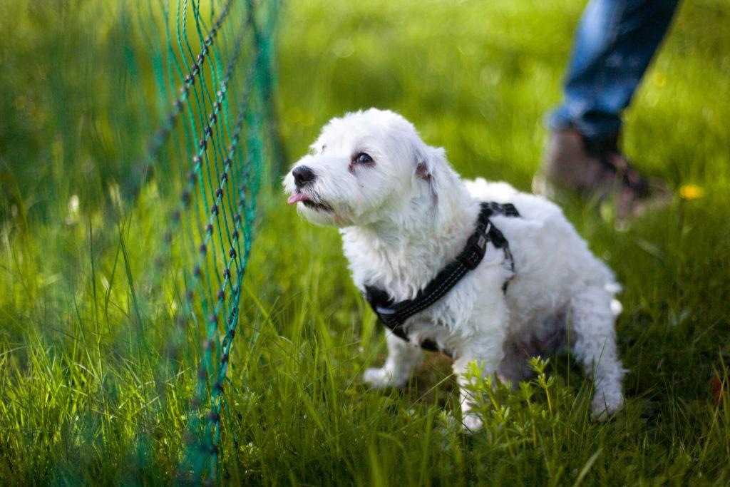 Tierfotografie Hund beim spielen
