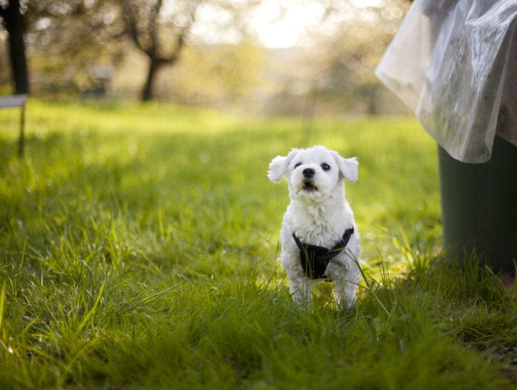 Tierfotografie Hund bellt